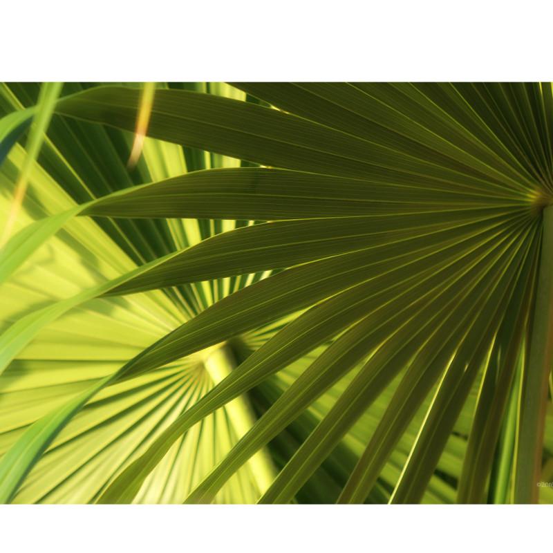 Palms framed