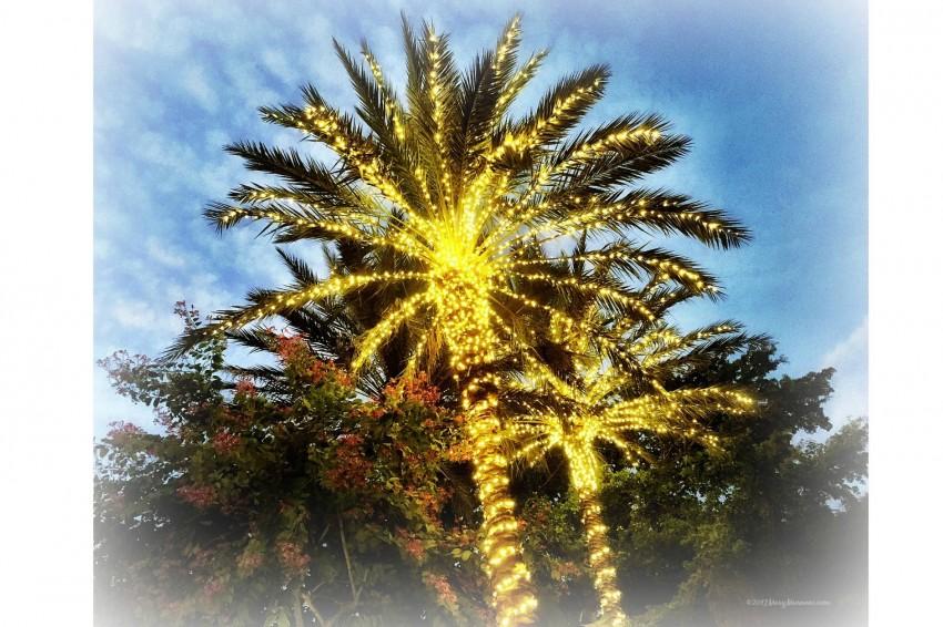 2017-palm-trees-final