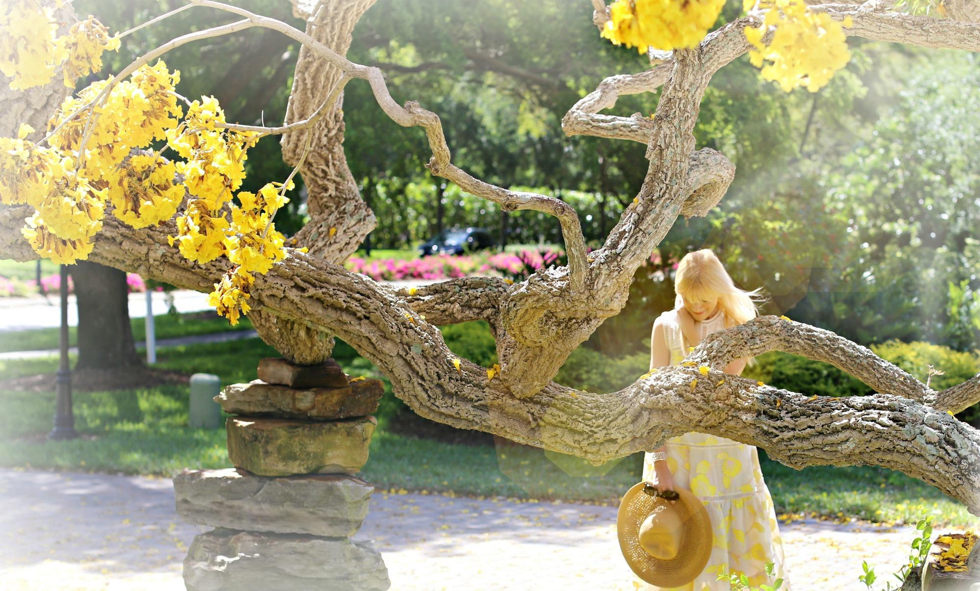 belle de fleur 5 effect 5